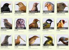 Landleven.nl - Tuinvogels Hier kun je luisteren hoe de vogels fluiten. Zo kun je aan het geluid herkennen welke vogels in je tuin zitten. Handig