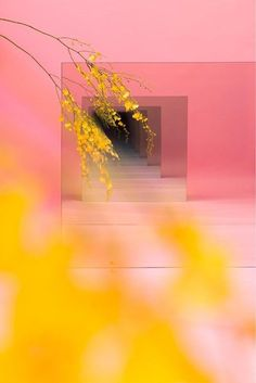 Pink With Yellow