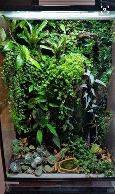 An incredible varied vivarium. Fish Tank Terrarium, Gecko Terrarium, Orchid Terrarium, Aquarium Terrarium, Reptile Terrarium, Terrarium Plants, Reptiles, Lizards, Amphibians