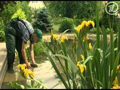 Фазенда: Пруд-беседка (03.07.2011 )- Fazenda: pond gazebo (07/03/2011)