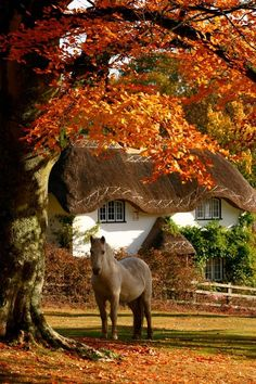 Beautiful. Is this heaven or what? Horse in autumn outside a thatch roof cottage