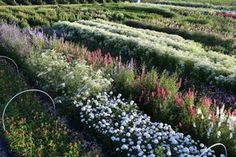 Cultivando flores e ilusiones. Cut Flower Garden, nuevo libro de Floret Farm | El Blog de La Tabla