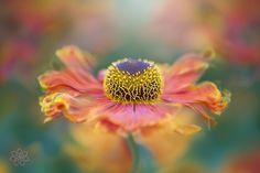 Summer Breeze | Flickr - Photo Sharing!