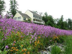 Beautiful Perennial Wildflower Landscaping