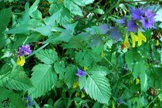 Dégradé coloré floral