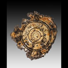 Dale Robbins is a Master Woodturner who creates unusually large and spectacular wall hangings and stand alone pieces using a lathe he built by hand.