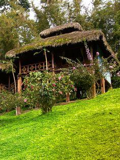 Cabañas en medio de la #naturaleza para que te sientas parte de ella. Ven a #Arashá, estamos a solo dos horas de #Quito.