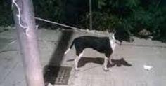 Passeggia con il cane al guinzaglio poi lo lega al palo e fugge