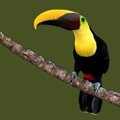 Animals of Costa Rica - Stefan Kunz Ios App, Costa Rica, Animals, Animales, Animaux, Animais, Animal