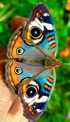 Butterfly Painting, Butterfly Wallpaper, Butterfly Wings, Beautiful Bugs, Beautiful Butterflies, Beautiful Creatures, Animals Beautiful, Butterfly Pictures, Bugs And Insects
