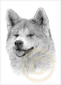 Dog Japanese Akita Art Pencil Drawing Print A4 Signed by Artist Le | eBay