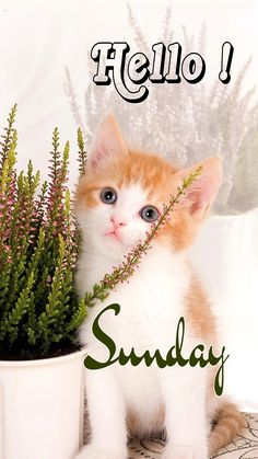 Sunday Gif, Sunny Sunday, Happy Sunday, Good Morning Messages, Good Morning Wishes, Sunday Greetings, Fathers Day Messages, Days Of Week, Candle