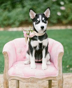 54 Photos of Dogs at Weddings That Are Almost Too Cute for Words | Wedding Pets