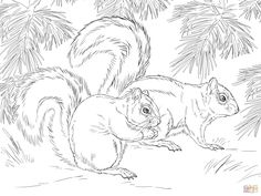 mexican-fox-squirrel-coloring-page.jpg (2048×1536)