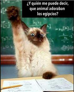 El gato sí sabe. Que animal adoraban los egipcios