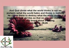 1 Corinthians 1 :28,29