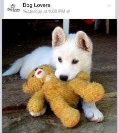 A puppy & his teddy bear