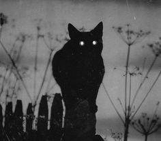 aesthetics, purple and black et roxo e preto image sur We Heart It Black Cat Aesthetic, Witch Aesthetic, Purple Aesthetic, Arte Obscura, Night Vale, Witch House, Arte Horror, Occult, Dark Art