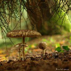 Mushroom Photograph 10X10 Mushroom Print by machelspencePHOTO, $14.99
