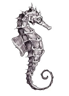 realistic seahorse drawing - Google Search
