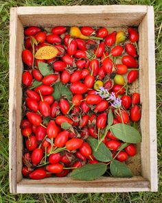 MsMarmiteLover: Foraging in my own garden: rosehip syrup and Rosehip Syrup, Garden Inspiration, Stuffed Peppers, Vegetables, Food, Stuffed Pepper, Veggie Food, Vegetable Recipes, Meals