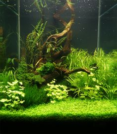 A Great Deal Of Men And Women Love Aquascapes Since They Give Us A Way To  Experience A Completely Different World. Every Aquascape Needs To Have A  Focus.