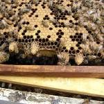 Bees and Wet Weather
