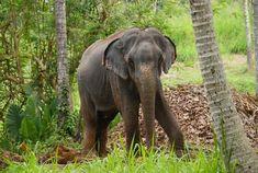 Bandara - Meet the Elephants - Aliya Dung Paper Elephants, Gifts For Friends, Eco Friendly, Meet, Paper, Elephant