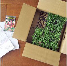 クラピア<1>芝生に代わる新しいグランドカバーの魅力! | クラピア大好き Outdoor Plants, Lawn And Garden, How To Dry Basil, Diy And Crafts, Projects To Try, Herbs, Green, Flowers, Gardens