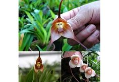 21 of the Wackiest Flowers and Plant Life You've Never Seen | Photos | HGTV Canada - We're Not Monkeying Around 1 of 21