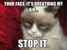 Grumpy Cat Pictures with Captions | Grumpy cat by ~ganz13676 on deviantART