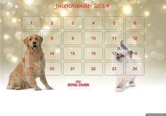 Delta på Royal Canins julekalender! Svar på spørsmål og vinn flotte premier