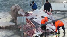 """No Whaling This Summer 