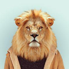 Yago Partal, Zoo Portrait : Lion