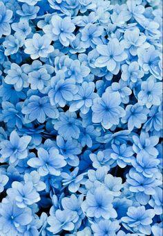 Blue Flowers Wallpapet