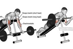 Prone incline barbell curl exercise