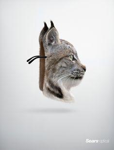 #Sears Optical: Lynx #Ad #Print