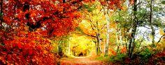 Conheça 10 incríveis e apaixonantes túneis de árvores - Quem não gosta de viajar? Ou melhor ainda, quem não gosta de conhecer lugares incríveis e com belas paisagens?  Pensando nessa atividade de bem estar tão deliciosa, que além de lindas fotografias rende conhecimento, desenvolvemos este post na intenção de apresentar a vocês lindos lugares, como ... - http://www.apaixaodecristo.com.br/ecoblog/2015/09/01/conheca-10-incriveis-e-apaixonantes-tuneis-de-arvores/