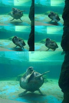 tortue swag - My Reptiles World 2019 Funny Animal Jokes, Cute Funny Animals, Funny Cute, Hilarious, Baby Sea Turtles, Cute Turtles, Cute Animal Pictures, Funny Pictures, Funny Animal Photos
