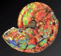 opal-ized ammonite (aka ammolite).