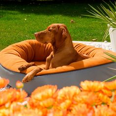 Have to have it. Bowsers Eco+ Orbit Pet Bed - $89.99 @hayneedle