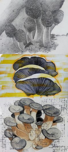 The fine detail and surface texture in these mushroom drawings is contrasted with experimental mark-making: exemplary handling of media by an IGCSE Art & Design student. Natural Forms Gcse, Natural Form Art, Mushroom Drawing, Mushroom Art, Art And Illustration, Medical Illustration, Sketchbook Inspiration, Art Sketchbook, Kunst Portfolio