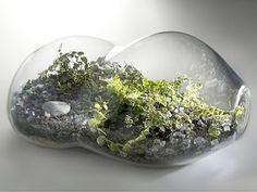 Jardines miniatura: Terrarios - Taringa!