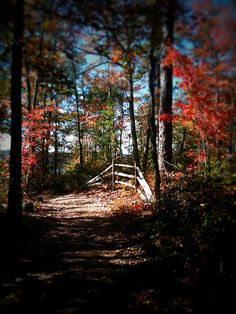 Fall color at Red River Gorge in KY