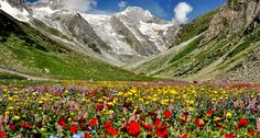 Valley of Flowers - Trekking in Uttarakhand India