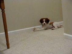 dog + door stop = adorbs