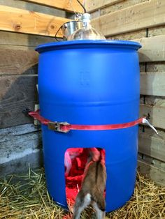 Kid warmer: A 55 gallon FOOD GRADE plastic barrel. Cut a hole the diameter of a heat lamp in the top lid leaving enough to run 4 screws through the rim of the metal lampshade into the top of the barrel. Be sure the bulb won't be touching the plastic. Goat Shelter, Sheep Shelter, Goat Pen, Goat House, Goat Care, Nigerian Dwarf Goats, Raising Goats, Building A Chicken Coop, Mini Farm
