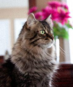 Beautiful Bert, via Flickr.
