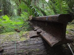 Pic of the Day... Hope this great shot from the Spruce Railroad Trail brightens your Monday morning! The Spruce, along the shores of Lake Crescent, is part of the incredible Olympic Discovery Trail, 126 miles of soon to be connected trail the width of Washington's Olympic Peninsula. Add that to the bucket list.  Read more about the ODT: http://www.railstotrails.org/news/features/olympicdiscovery.html
