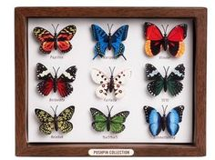Butterfly Pushpin Collection